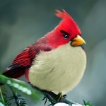 real-life-angrybirds-red-bird