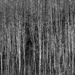 pb-paisagem-13