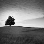 pb-paisagem-7