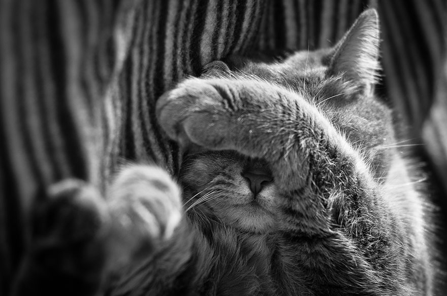 cat-black-and-white-photography-7