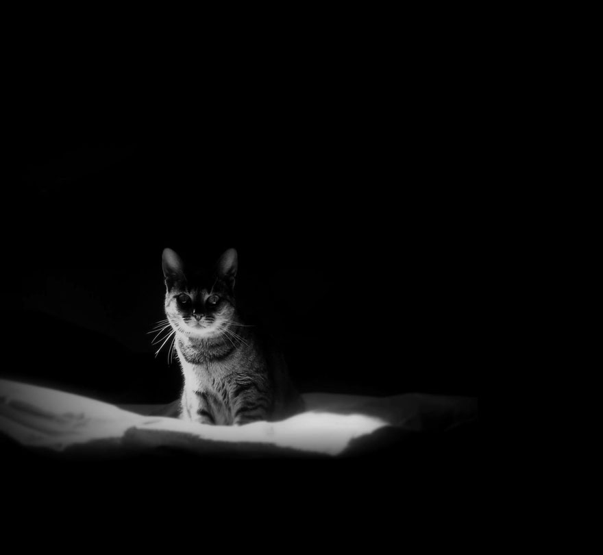 cat-black-and-white-photography-9