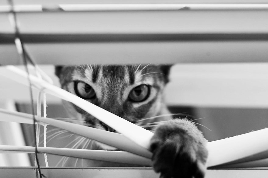 cat-looking-at-you-black-and-white-photography-2