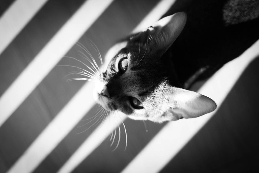 cat-looking-at-you-black-and-white-photography-3