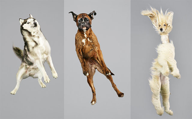 dogs-air